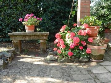 Flowers under pergola