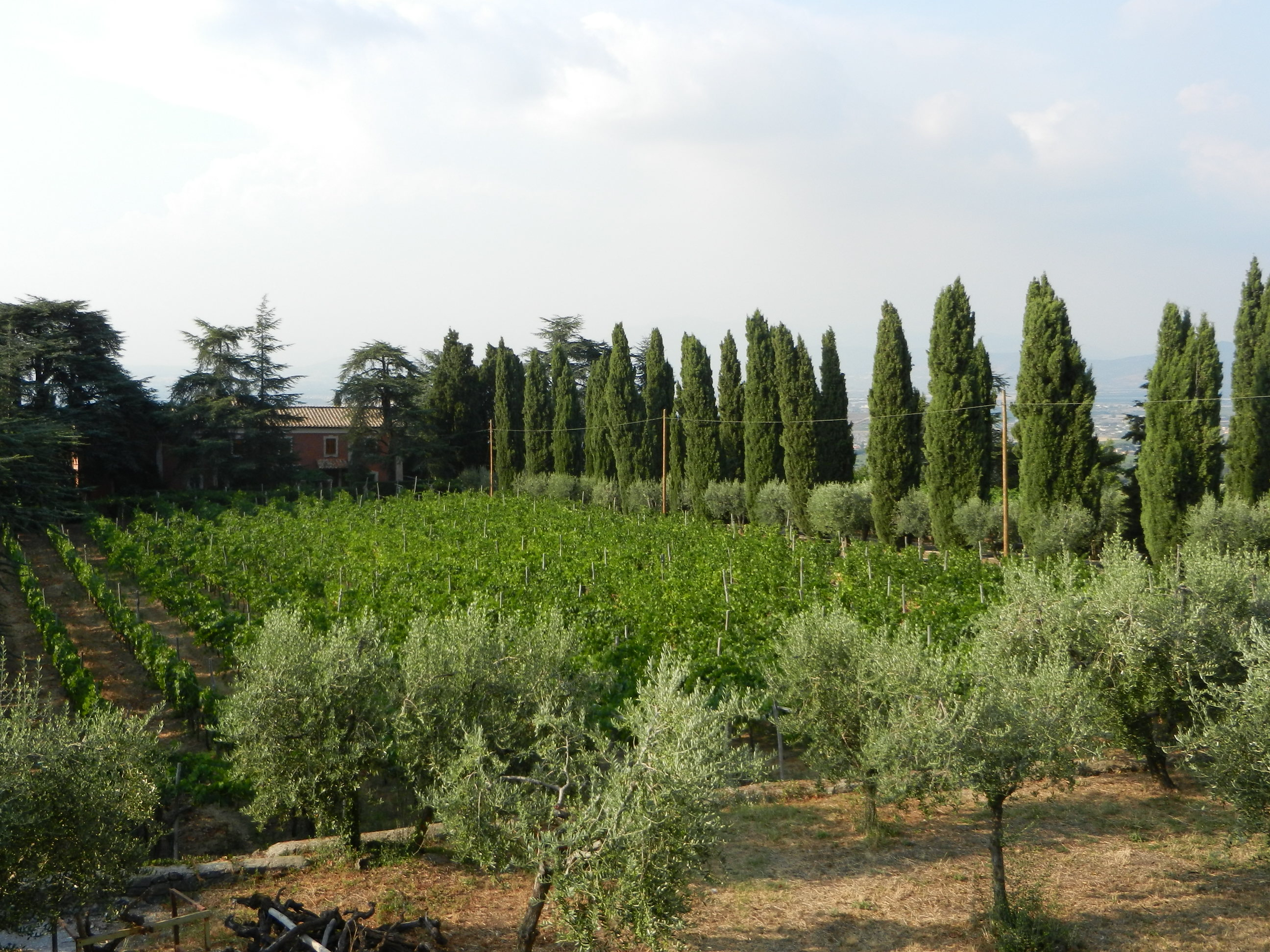 Casale Sonnino amidst vineyards