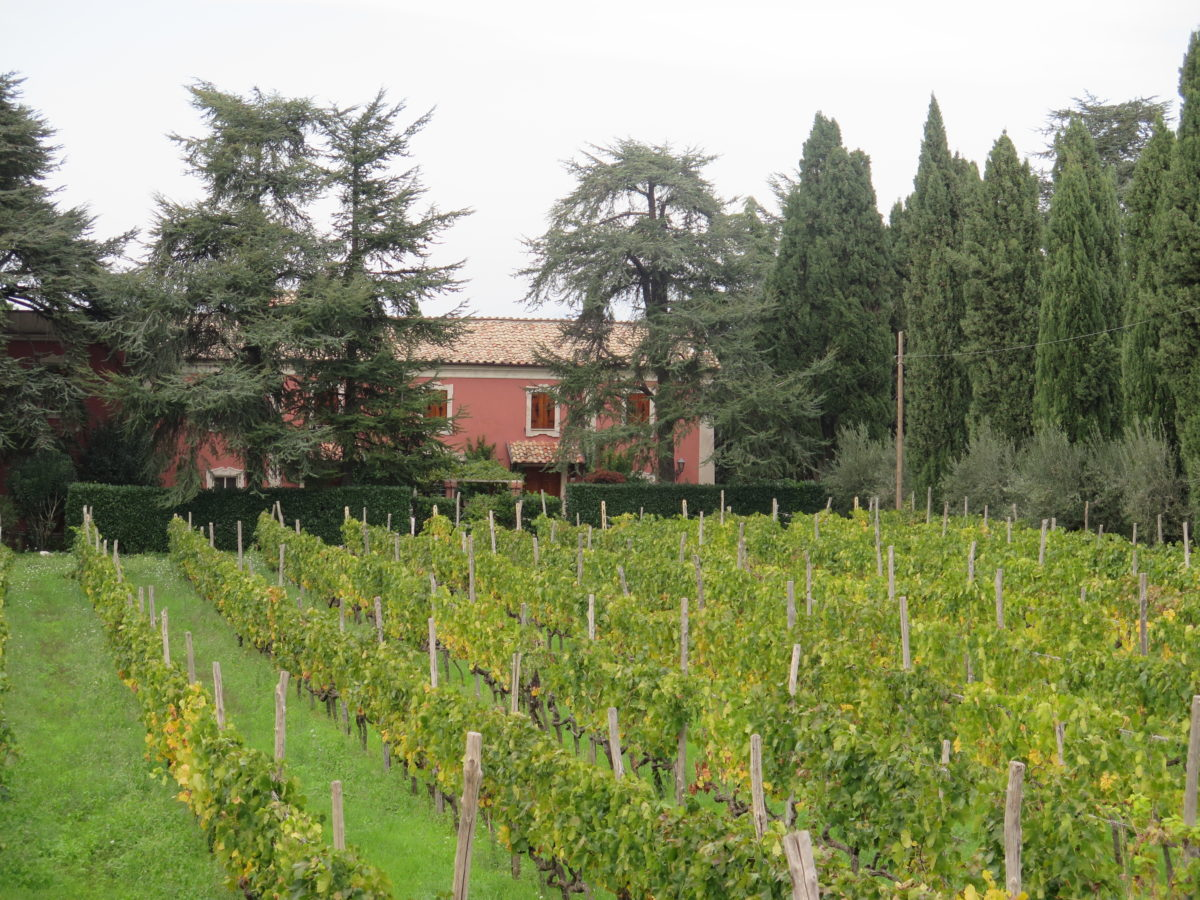 Casale Sonnino and Vineyard